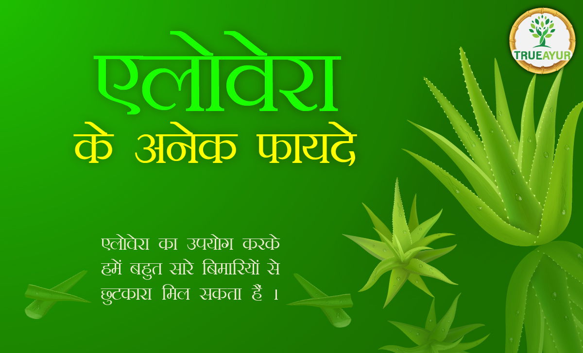 Read more about the article एलोवेरा के फायदे